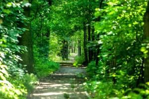 Szlak zygzakiem z naturą