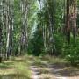 Lasy okolice Urli